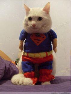 Super Nyan (cat) スーパーニャン pic.twitter.com/b7RVf6dTN8