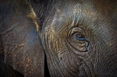 Blue eye-lined elephant!