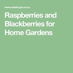 Raspberries and Blackberries for Home Gardens