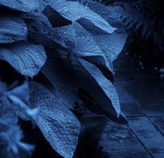 Grey Scottish Summer…………… Photograph and Image ©David Beattie Blue Bath, Plant Leaves, Plants, Plant, Planets