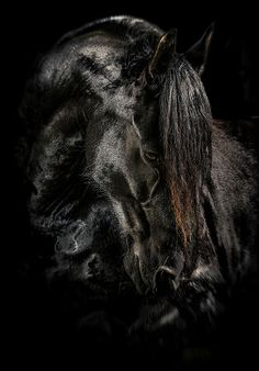 Image result for horse photography black and white