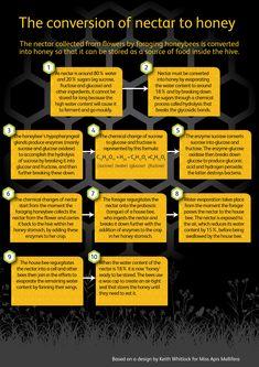 Winter studies: How honeybees use nectar, pollen, propolis and water Winter studies: How honeybees use nectar, pollen, propolis and water
