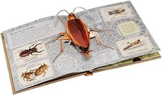 Bugs: A Stunning Pop-up Look at Insects, Spiders, and Other Creepy-Crawlies by George McGavin Pop Up, Bug Toys, 1000 Gifts, Plastic Design, Up Book, Unusual Gifts, Gifts For Boys, Funny Gifts, Creepy