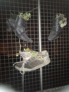 zapatos & botas & plantas