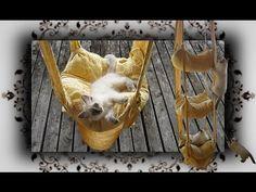 DIY  Hängekissen Schaukel für Katzen | handmade Cats Trapeze - YouTube