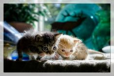 "FTA: ""These itsy bitsy charmers were rescued by photographer Scott Allan after he found them in a junk pile near the side of his house."" Oh dear god, my brain just splorted five times over from all the CUTE! Newborn Kittens, Baby Kittens, Cats And Kittens, Tiny Kitten, Kitten Love, Kittens And Puppies, Cute Kittens, Baby Animals, Cute Animals"
