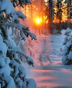 Winter sun in the forest in Kittilä, Lapland, Finland