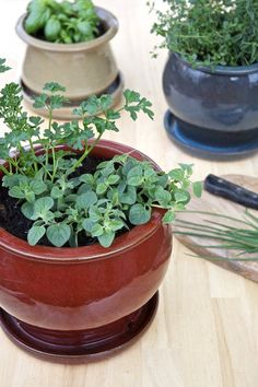 Tips for a Small-Space Kitchen Herb Garden