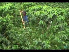 Como controlar Malezas Arvenses con el Selector- TvAgro por Juan Gonzalo... Control, Outdoor Structures, Herbs, Plants