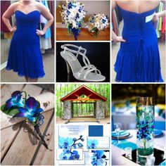 Blue Dendrobium Orchids :  wedding blue colors dendrobium orchid BlueDendrobiumBoard