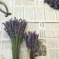 ⬛ ラベンダー・グロッソの名前の由来 |花織のアロマに魅せられて~あなたを知る香りのツール~