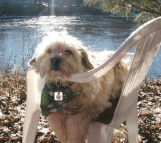 Toulouse by the river in a lawn chair