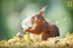 The 2019 finalists for the Comedy Wildlife Photography Awards demonstrate the joys of the happy accident — from a deadpan Japanese macaque to a squirrel wishing on a dandelion. Animals And Pets, Baby Animals, Funny Animals, Cute Animals, Funniest Animals, Animals Planet, Comedy Wildlife Photography, Animal Photography, Photography Awards