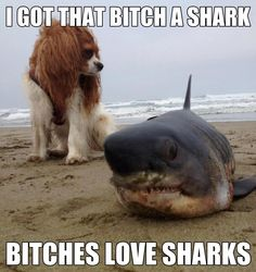 #dogshark #meme #memes