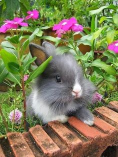 Wish this bunny lived in my garden.