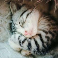 Sleepy Kitty by Reminderod