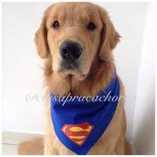 Resultado de imagem para bandanas para cães personalizadas