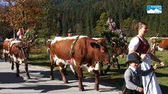 Alle Infos: http://www.berchtesgadener-land.com/de/almabtrieb/ Die Halsalm liegt oberhalb des Hintersees in der Gemeinde Ramsau bei Berchtesgaden. Jedes Jahr...