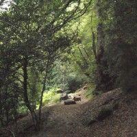 Sendero de Ermita de la Virgen de Pineta a llanos de la Larri #TrekkingEuropa España
