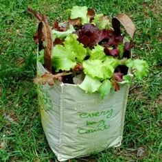 Vegetable Container Gardening - The Basics: Lettuce Container Garden in a Reusable Grocery Bag