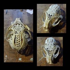 Done but too tired to take fancy pictures. But I will tomorrow under daylight Deer Decor, Skull Decor, Cow Skull, Skull Art, Bone Crafts, Antler Art, Skull Painting, Bone Jewelry, Bone Carving
