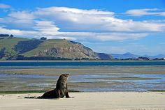 Dunedin. New Zealand
