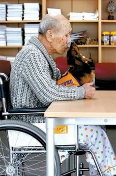 Namu, a South Korean Therapy Dog, trained to help dementia patients. So sweet.  Love this and his polka dots jamma pants!