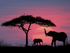 elephant silhouette - Google Search