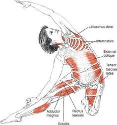 Parighasana (Gate-Latch Pose) © Leslie Kaminoff's Yoga Anatomy