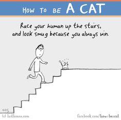 http://lastlemon.com/cats/cat405/