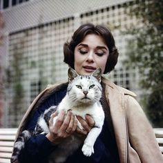 "Polubienia: 1,378, komentarze: 9 – Rare Audrey Hepburn (@rareaudreyhepburn) na Instagramie: ""Audrey photographed by Sam Shaw in Paris,1957. #audreyhepburn  Credit @timelessaudreyhepburn"""
