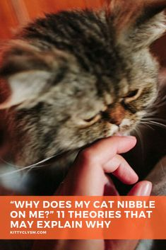 A lot of pet parents have cats who bite them or lick them frequently enough that these curious behaviours seem habitual. Some have cats who bite feet or bite fingers regularly. Others have cats who enjoy biting then licking, or vice versa, or alternate between the acts of licking and biting repeatedly within the same sitting. Some cats lick fingers … Cat Behavior Problems, Cat Biting, Getting Played, Human Babies, Lots Of Cats, Pet Care Tips, All About Cats, Cat Facts, Cat Grooming