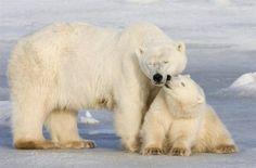 Amor de urso (© Rex Features/FOTODOM.RU)