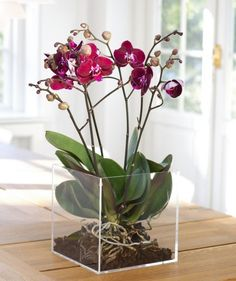 Phalaenopsis Orkideer Phaleonopsid are the most popular and easily available orchid. Here are some grow care tips for orchis: Related Post Phalaenopsis Mini Mark Phalaenopsis – Diamond Series How To Make A Terrarium Quickly And Easilyİkili Orkide Orchid Terrarium, Orchid Planters, Orchid Pot, Orchids Garden, Garden Plants, Terrarium Wedding, Moth Orchid, Sun Garden, Indoor Flowers