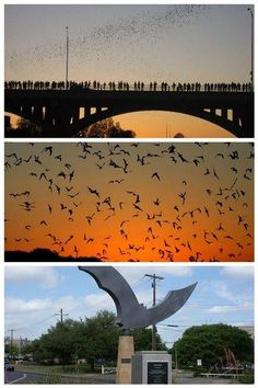Austin, TX...Congress St bats