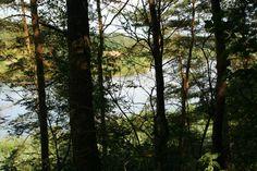 Vakantie in het bos deel 1