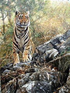Original Tiger Paintings by Alan Hunt