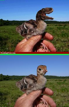 Fake - Baby Dinosaur - The original image of a Baby Turkey is on the bottom.