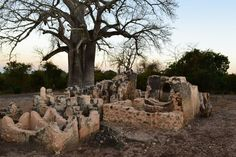 Kilwa - where the legacy of an extraordinary city state of wealth and power resides in the wake of a Boabab tree