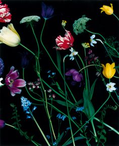 Denise Grünstein - just bought her fantasitc photobook with great flower photos; 59 buketter.
