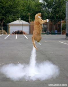 Perfectly_timed_cat_x Pixels Funny Cat Photos Funny Images Funny Animal