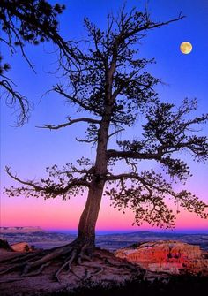 ~ Tree by Moon Light ~ Bryce Canyon, Utah....