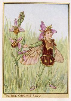 Bee Orchis Flower Fairy Vintage Print, c.1950 Cicely Mary Barker-boekillustratie plaat