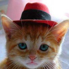 Cute face kitten...^-^