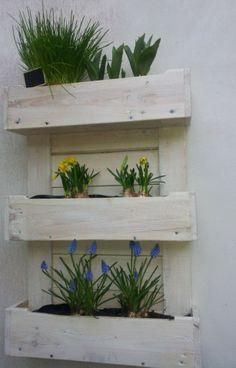 Bloembak voor aan de muur gemaakt van oude pallets, Nu nog met bloembollen maar van de zomer wordt hij gevuld met kruiden, aardbeien- en tomatenplantjes.