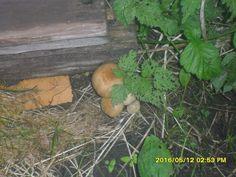 Первые грибы!