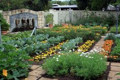 Lovely mix of flowers and edibles in this kitchen potager garden