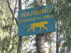 well I guess one must stay alert   Cougar on the loose