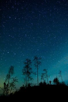 night sky: stars at night, trees silhouetted