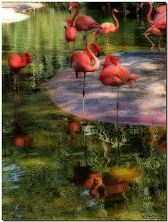 What would be a good topic about flamingos?